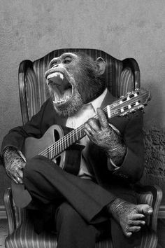 Our Favorite Primate Songs