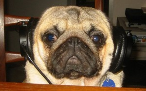 pug-with-headphones
